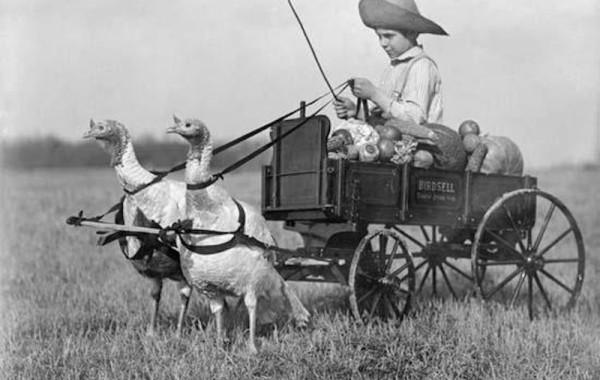Kinder oude foto struisvogel
